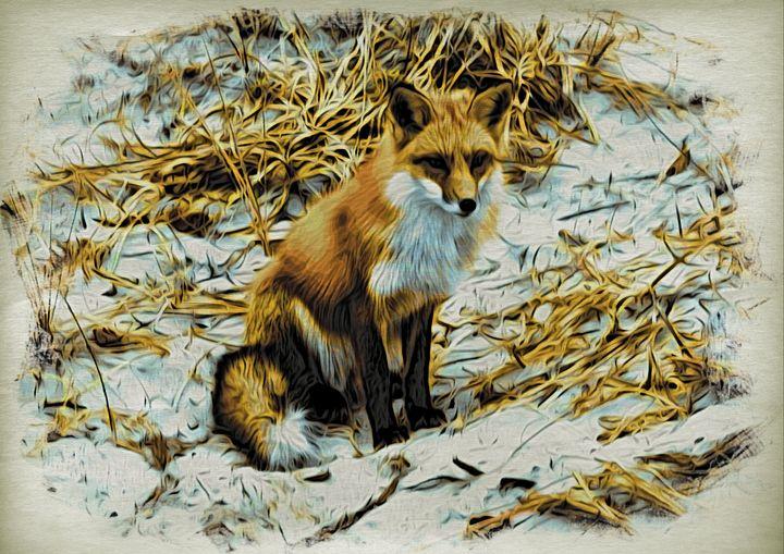 Fox at Island Beach - Richmanphotoart.com