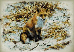 Fox at Island Beach
