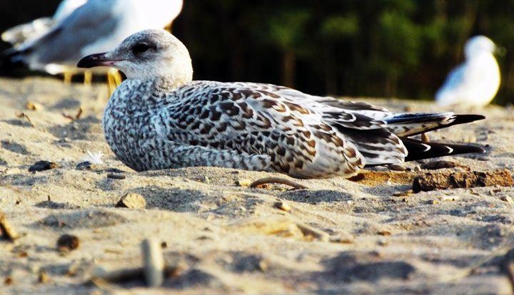 Beach Birdie - Shayne's Photography