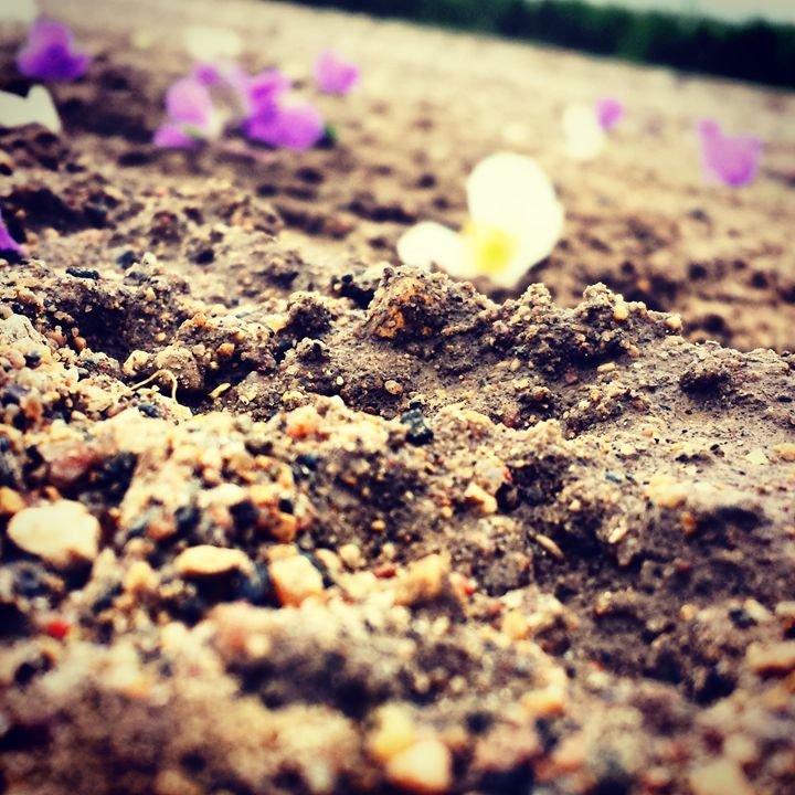Dodgy Flowers - Nejandrea
