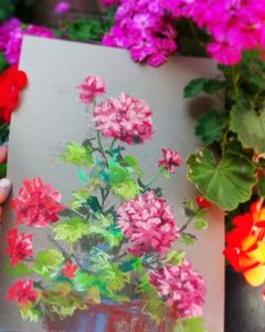Geraniums in July