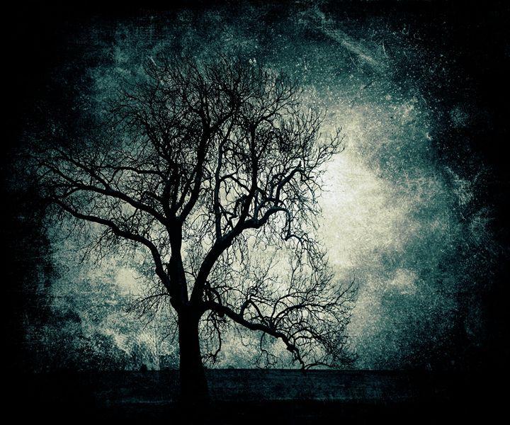 Magic tree - Fantom66