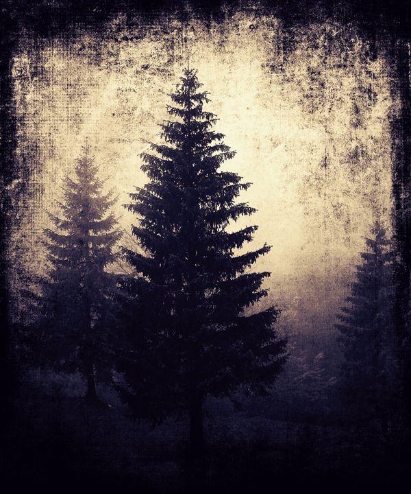 Beautiful Forest Landscape - Fantom66
