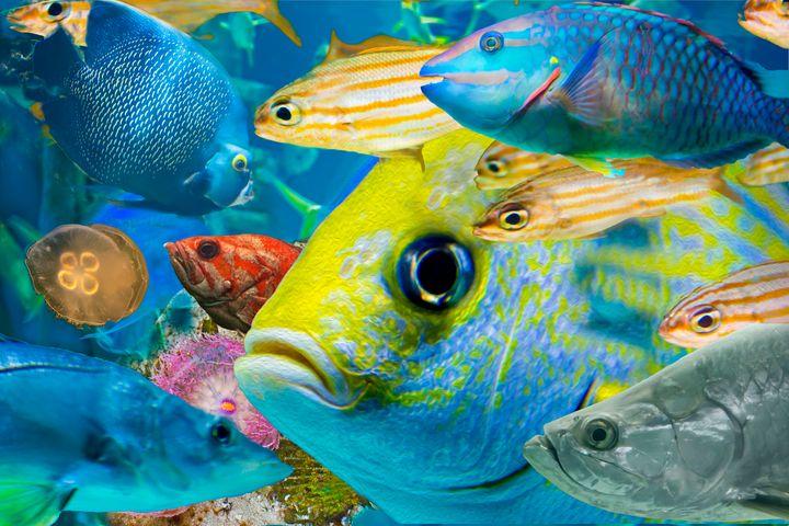 Fishy Collage 02 - Welborne Fine Art
