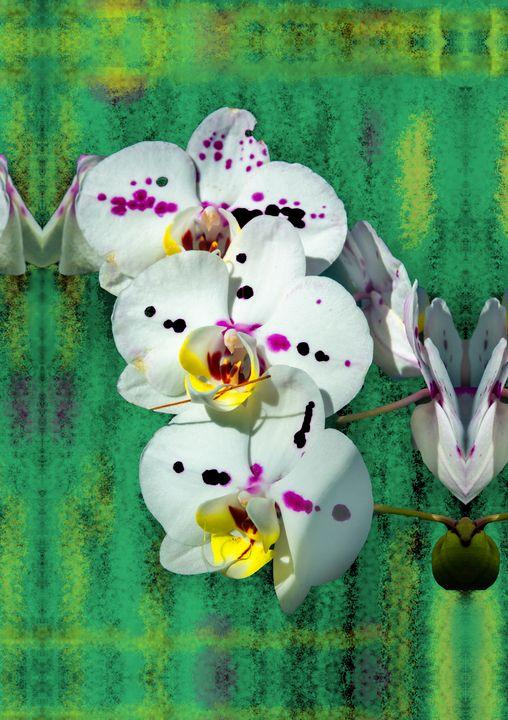 Spotted Phalenopsis in Florida - Welborne Fine Art