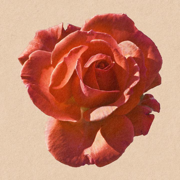 Red Rose - Welborne Fine Art