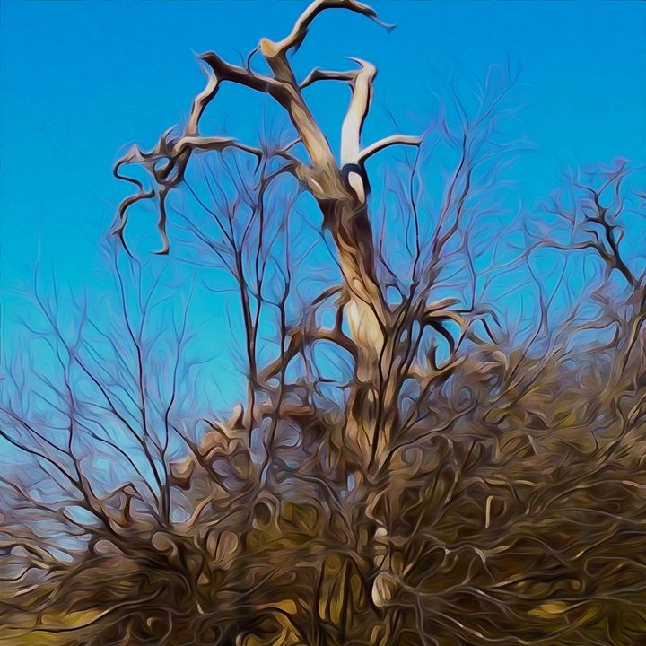 Gnarled - Aspen Willow Fine Art Photography Gallery