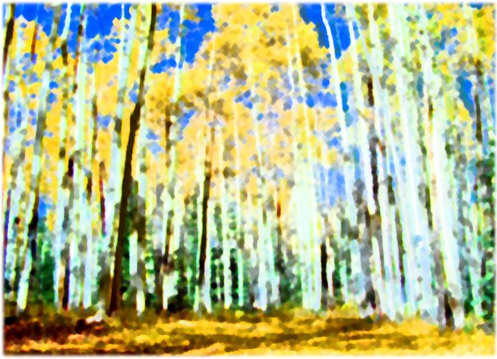 Aspens In The Fall - Aspen Willow Fine Art Photography Gallery