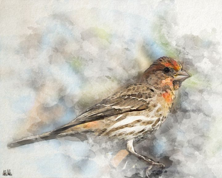 Red Headed House Finch in Watercolor - Aspen Willow Fine Art Photography Gallery