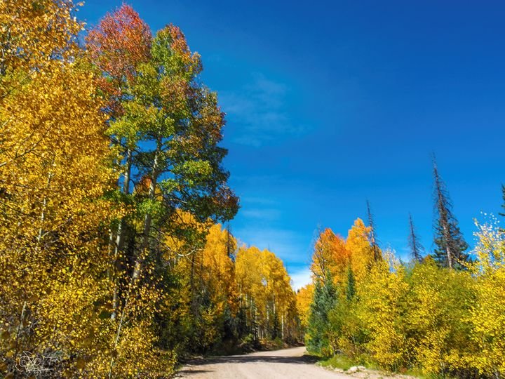 Driving The Dirt Road - Aspen Willow Fine Art Photography Gallery