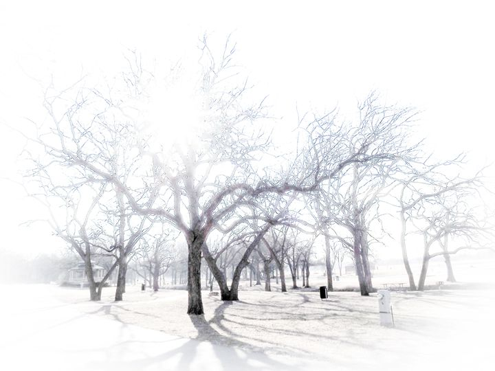 Shadows in the Fog - Aspen Willow Fine Art Photography Gallery