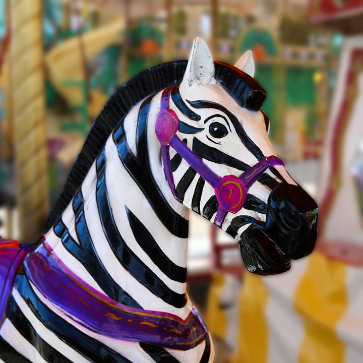 Zebra on the Carousel - Aspen Willow Fine Art Photography Gallery