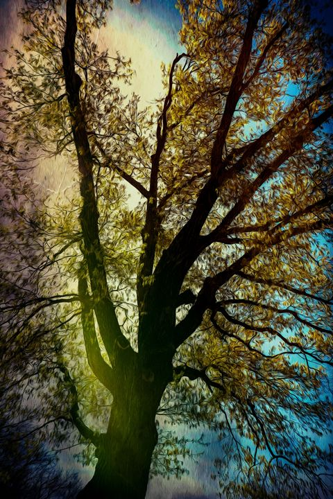 Painted Tree - Aspen Willow Fine Art Photography Gallery