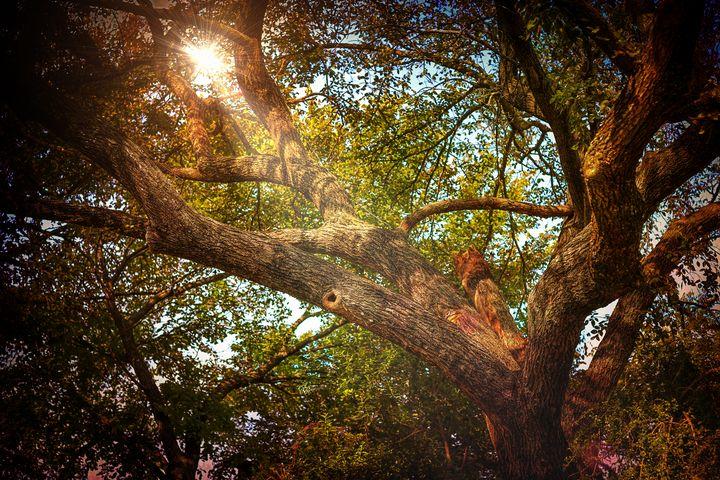 Sunlight Through Branches - Aspen Willow Fine Art Photography Gallery