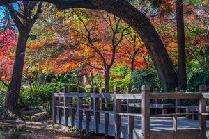 Nature's Autumn
