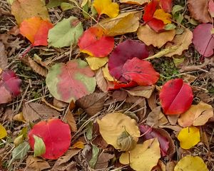Fall on the Ground