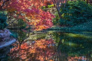 Red Maple Water Reflections
