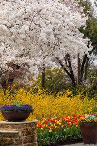 Whites in Spring