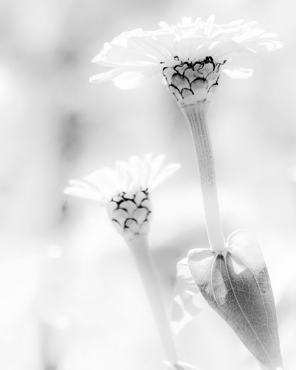 Black and White Delight - Aspen Willow Fine Art Photography Gallery