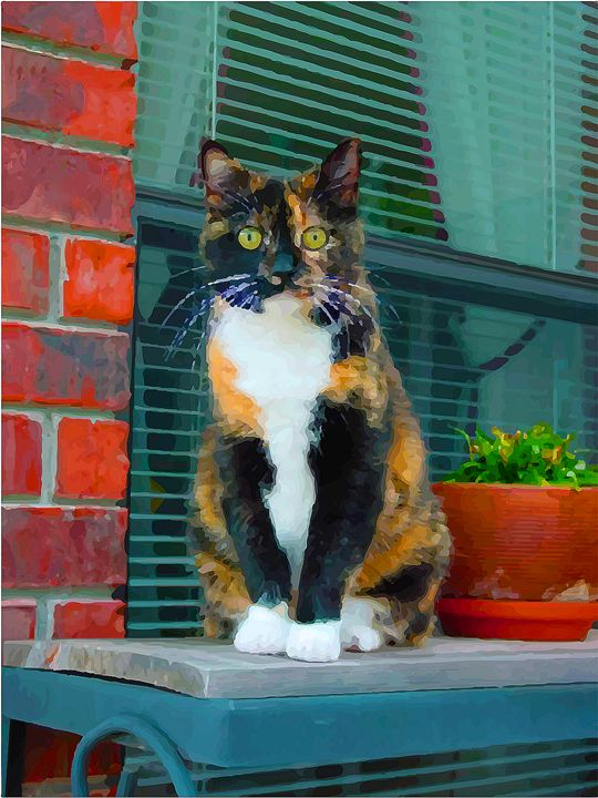 Calico Cat - Aspen Willow Fine Art Photography Gallery