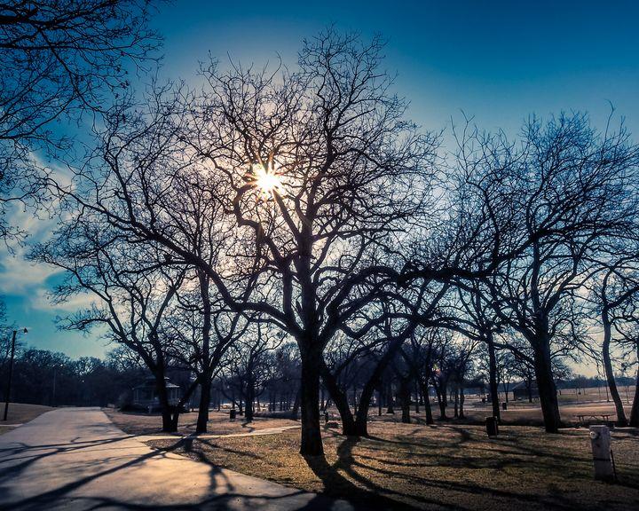 Long Shadows - Aspen Willow Fine Art Photography Gallery