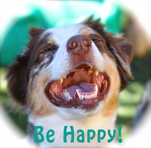 Be Happy - Australian Sheperd - Aspen Willow Fine Art Photography Gallery