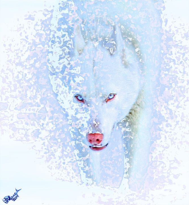 Snow Dog - Aspen Willow Fine Art Photography Gallery
