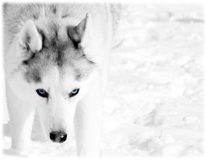 The Eyes Have It - Aspen Willow Fine Art Photography Gallery