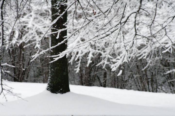 Snow Sigh - Xtraordinary Evoked