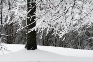 Snow Sigh