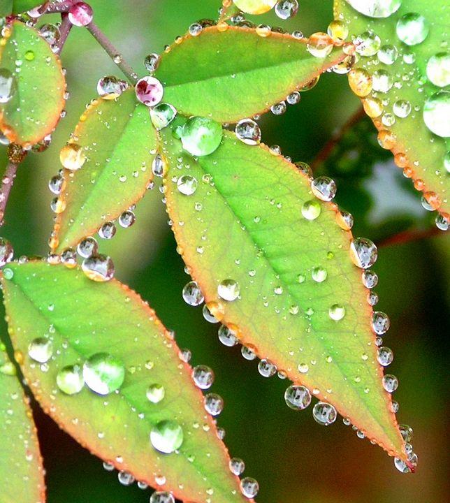 Dew Jewels - Xtraordinary Evoked
