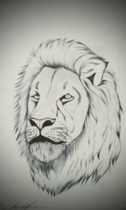 The head lion