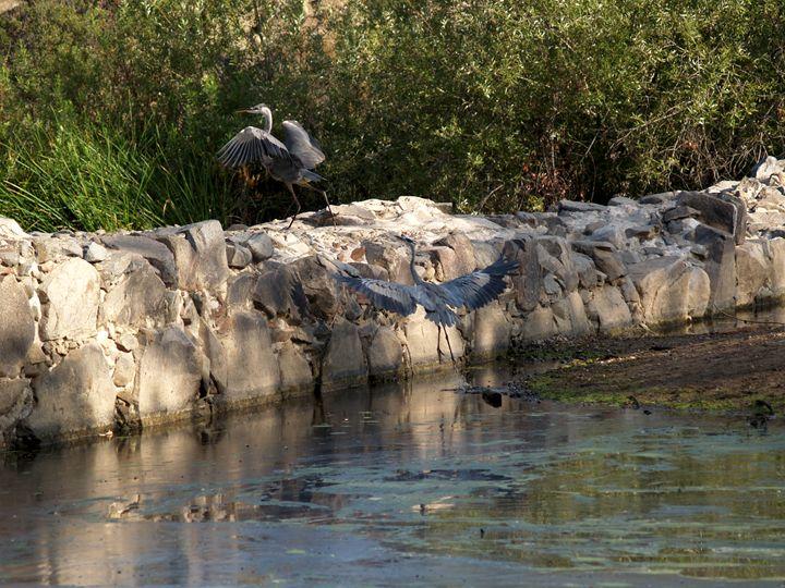 Herons on wall - Eveoak