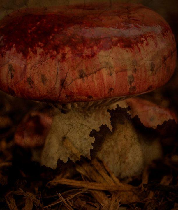 Textured Mushroom - Flashbulb Foto