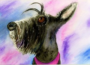 Scottish Terrier - Watercolour
