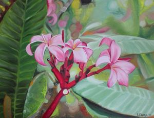 Cluster of Pink Frangipani