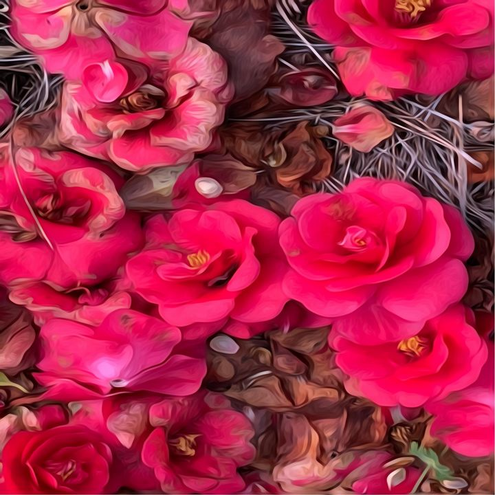 Bed Of Roses - Picturesque