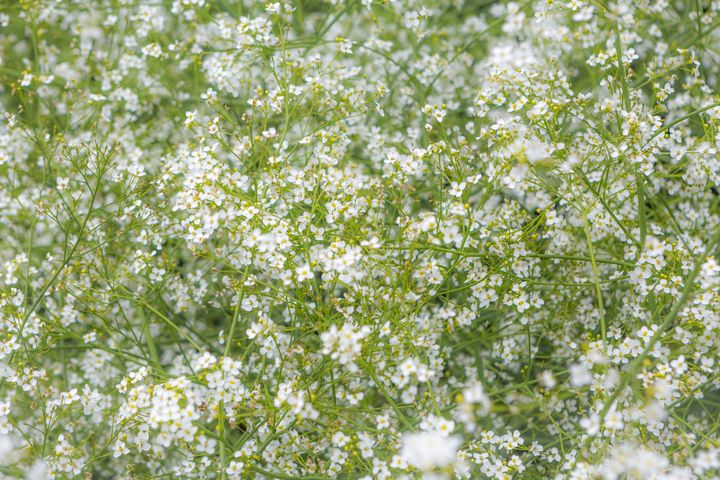 Tiny white flowers. - Dave Hare Photography