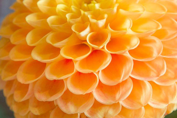 Orange Tubes - Dave Hare Photography