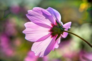 Backlit Flora