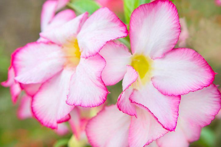 Mekong Flora - Dave Hare Photography