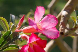 Vietnamese Flora
