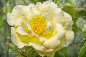 Vintage yellow Flora