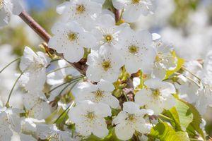 Tiny White Flora