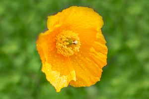Orange Garden Flora