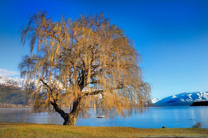 Lake Wanaka - Dave Hare Photography