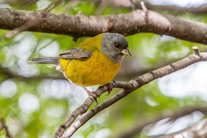 Patagonian Bird - Dave Hare Photography