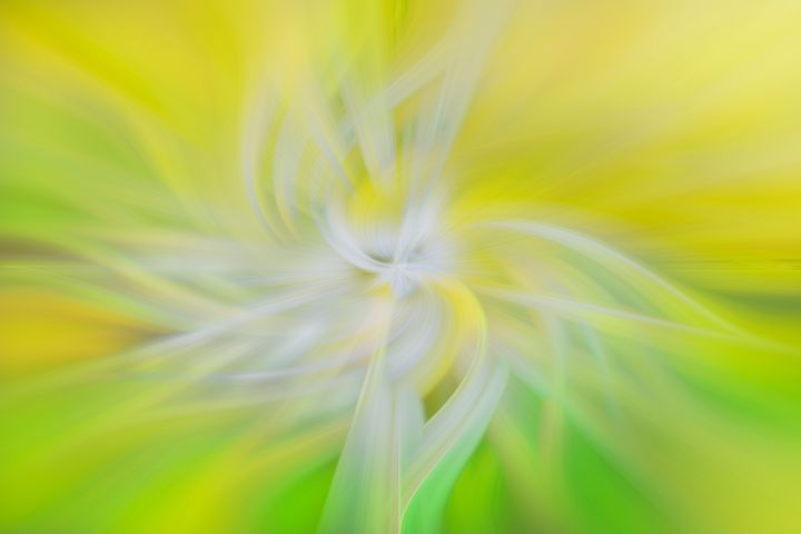 Snowdrop Swirl - Dave Hare Photography