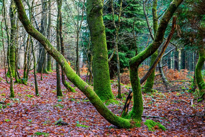 Green trees - Dave Hare Photography
