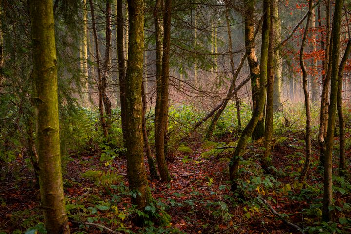 Evening Woodland - Dave Hare Photography